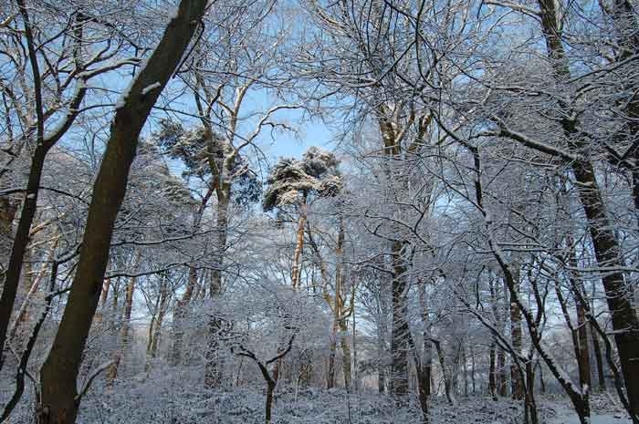 Pictures Of Germany In Winter. Germany a Winter Wonderland